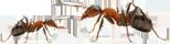 Predator Pest Solutions Pest Control London Sutton Surrey